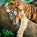 Animales exoticos que pueden ser peligrosos