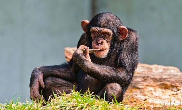 Animales omnívoros: Mono