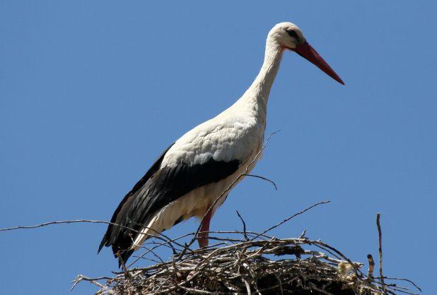 Aves de España