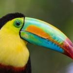 Aves exóticas del mundo