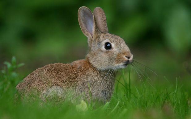 Curiosidades de los conejos