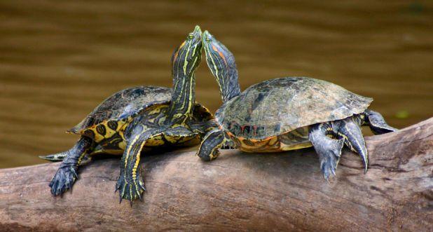 Informaciones sobre las tortugas