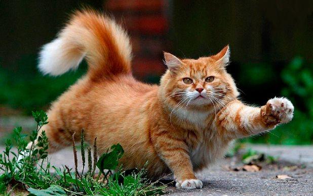 Informaciones sobre los gatos