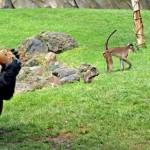 Los mejores lugares de España para disfrutar de los animales