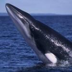 Lugares de España para ver ballenas