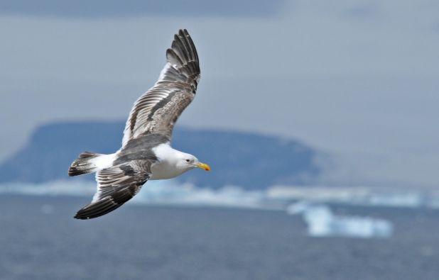 Aves de la Antártida