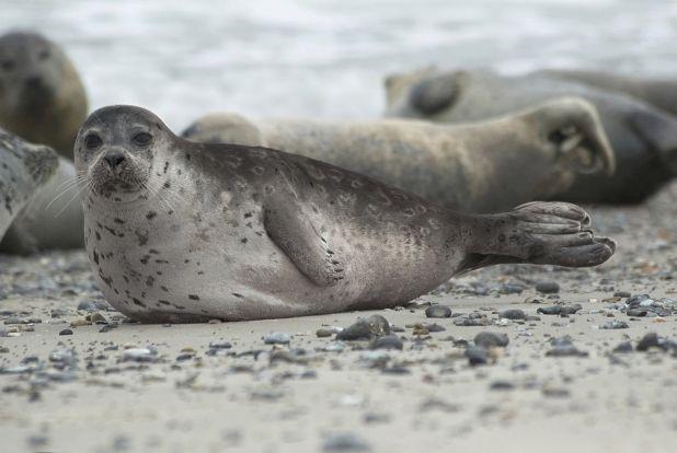 Información básica sobre las focas