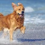 Las 10 mejores playas para perros en España