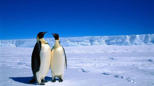 Pingüinos de la Antártida