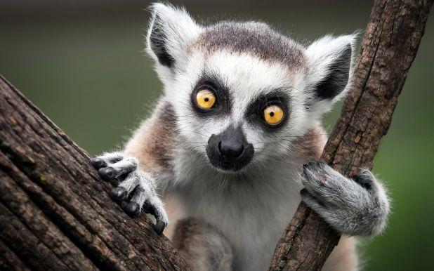 Mejores lugares para ver primates en libertad