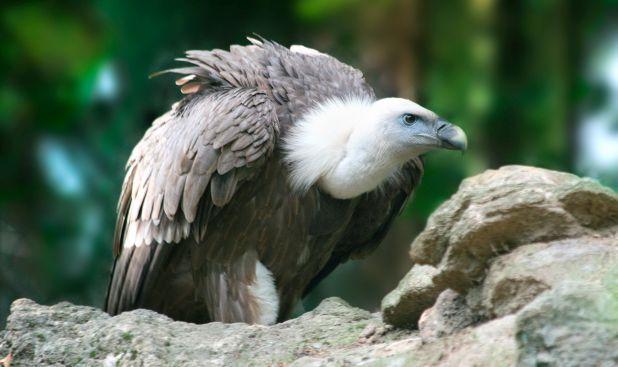 Aves que podemos ver en Espana