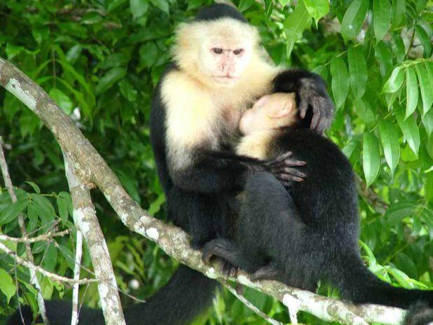 Comportamiento y socialización de los monos