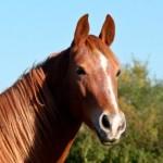 Curiosidades sobre los caballos