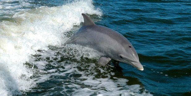 Delfines en Espana