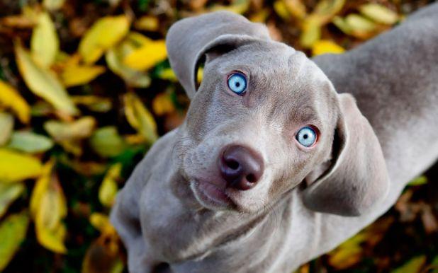Informaciones sobre los perros