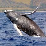 Mamiferos marinos que podemos encontrar en Espana