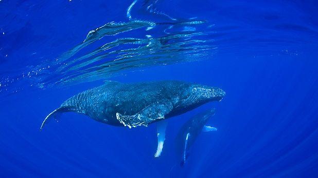 Ver ballenas en España