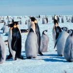 Animales de la Antártida