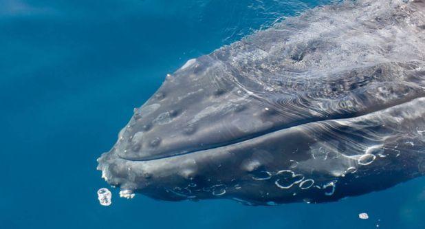 Los 5 mejores lugares del mundo para ver ballenas